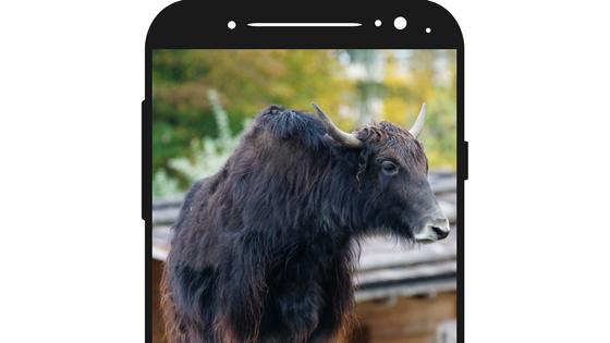 Image of bull on a phone.